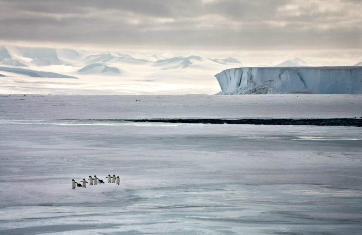 Une vie de Pingouins